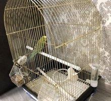 Попугайчик с клеткой - Птицы в Евпатории