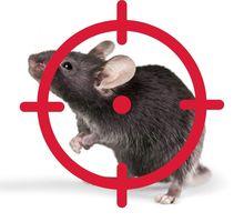 Обработка от крыс с гарантией на РЕЗУЛЬТАТ ГУРЗУФ - Клининговые услуги в Гурзуфе