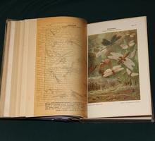 Продам Лемперта 1900 года издания - Книги в Феодосии