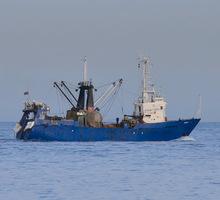 Матросы траловой команды на рыболовные суда - Сельское хозяйство, агробизнес в Севастополе