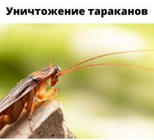 Обработка тараканов с гарантией до 1 года Саки - Клининговые услуги в Саках
