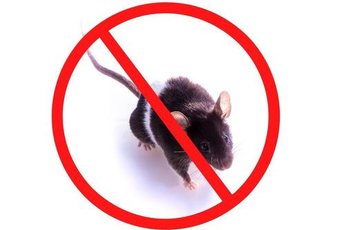 Обработка от крыс с гарантией на РЕЗУЛЬТАТ в Саки - Клининговые услуги в Саках