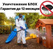 Уничтожение Блох С Гарантией в Симферополе - Клининговые услуги в Симферополе