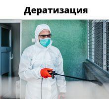 Дератизация в Симферополе - Клининговые услуги в Симферополе