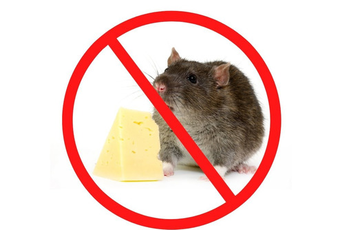 Обработка от крыс с гарантией на РЕЗУЛЬТАТ в Феодосии - Клининговые услуги в Феодосии