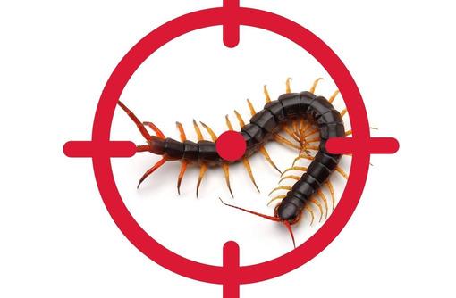 Уничтожение сколопендры в Феодосии - Клининговые услуги в Феодосии