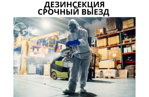 Уничтожение клопов в Форосе, фото — «Реклама Фороса»
