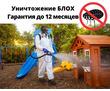 Уничтожение Блох С Гарантией в Форос, фото — «Реклама Фороса»