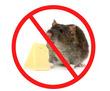 Обработка от крыс с гарантией на РЕЗУЛЬТАТ в Форосе, фото — «Реклама Фороса»