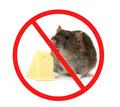 Обработка от крыс с гарантией на РЕЗУЛЬТАТ в Форосе - Клининговые услуги в Форосе