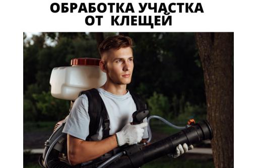 Уничтожение клещей на Участке в Форосе, фото — «Реклама Фороса»