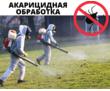 Акарицидная обработка, Уничтожение клещей с гарантией в Форосе, фото — «Реклама Фороса»