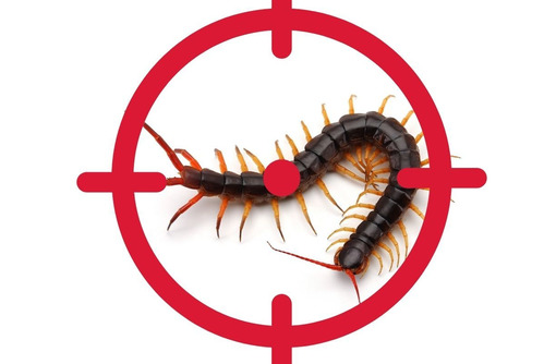 Уничтожение сколопендры в Форосе - Клининговые услуги в Форосе