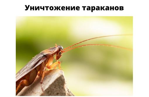 Уничтожение тараканов в Черноморском - Клининговые услуги в Черноморском