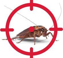 Служба по уничтожению тараканов в Черноморском - Клининговые услуги в Черноморском