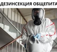 Обработка тараканов с гарантией до 1 года в Черноморском - Клининговые услуги в Черноморском
