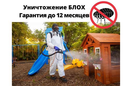 Уничтожение Блох С Гарантией в Черноморском - Клининговые услуги в Черноморском