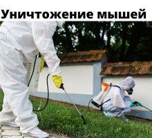 Дератизация в Черноморском - Клининговые услуги в Черноморском