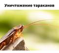 Уничтожение тараканов в Коктебель - Клининговые услуги в Коктебеле