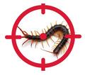 Уничтожение сколопендры в Коктебели - Клининговые услуги в Коктебеле