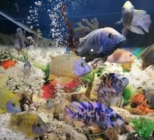 Обслуживание аквариумов - Аквариумные рыбки в Крыму
