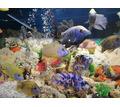 Обслуживание аквариумов - Аквариумные рыбки в Симферополе