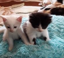 отдам даром в добрые руки - Кошки в Красногвардейском