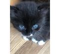 Отдам в хорошие руки котят - Кошки в Севастополе