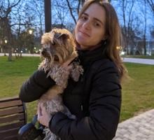 Догситтер в Симферополе (Няня для собаки) от 400 р./день - Дрессировка, передержка в Симферополе
