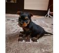Щенок йоркширского терьера (мальчик) - Собаки в Крыму
