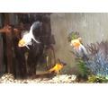 Аквариум 65 л - Аквариумные рыбки в Севастополе