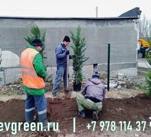 Покос травы в Севастополе, Ялте, Бахчисарае - Сельхоз услуги в Севастополе
