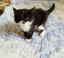 отдам в добрые руки котенка - Кошки в Севастополе