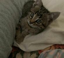 Ищет хозяина - Кошки в Севастополе