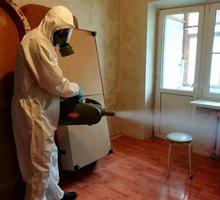 Уничтожение тараканов, клещей, насекомых, грызунов. - Клининговые услуги в Севастополе