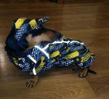 Шпулька -АТЕЛЬЕ И ПОШИВ одежды для собак - Продажа в Севастополе