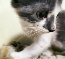 Котята в добрые руки - Отдам в добрые руки в Севастополе
