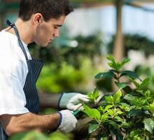 Требуются разнорабочие (озеленители, косари) - Сельское хозяйство, агробизнес в Севастополе