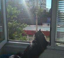 Бела Куна 7, Пропал кот! - Кошки в Симферополе