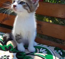 Милый котенок 1,5 месяца - Кошки в Крыму