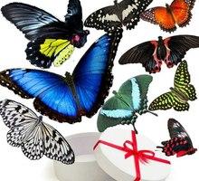 Салют из живых бабочек в подарок в Севастополе - Свадьбы, торжества в Севастополе