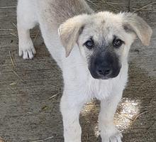 Щенок в добрые руки - Собаки в Севастополе