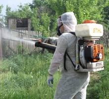 Уничтожение блох Симферополе по Крыму. - Клининговые услуги в Симферополе