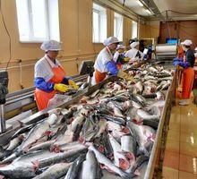 Рыбообработчики на береговой завод - Рабочие специальности, производство в Симферополе