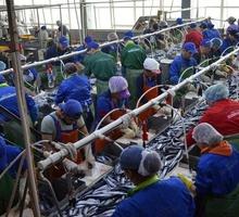 Обработка рыбы - Вахтовый метод в Симферополе