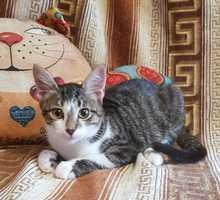 Отдам в добрые руки котят - Отдам в добрые руки в Керчи