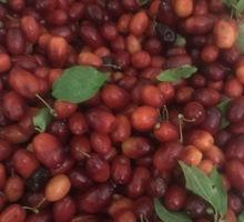 Кизил домашний - Эко-продукты, фрукты, овощи в Крыму