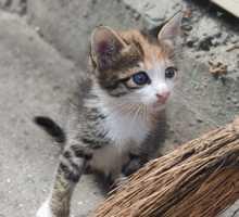 Отдам котят бесплатно - Кошки в Алуште