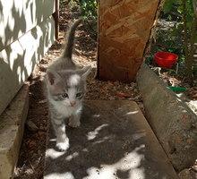 Котенок в добрые руки - Отдам в добрые руки в Севастополе