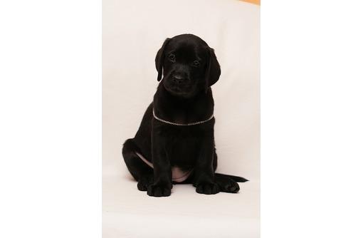 Лабрадор,черная девочка, питомник - Собаки в Севастополе